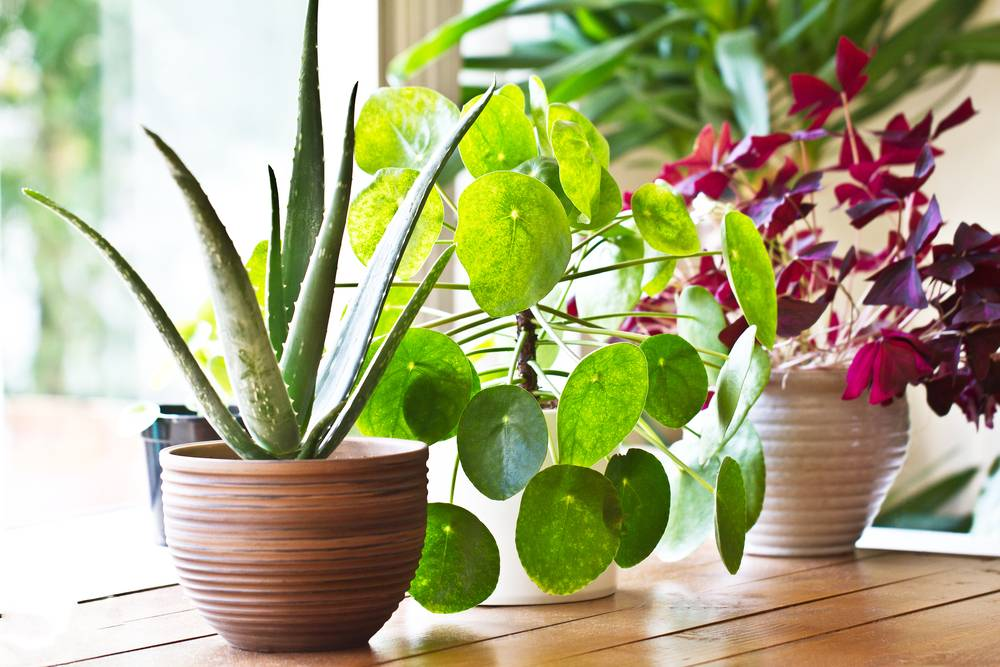 UVH Blog - THE TOP FIVE HOUSE PLANTS FOR 2019