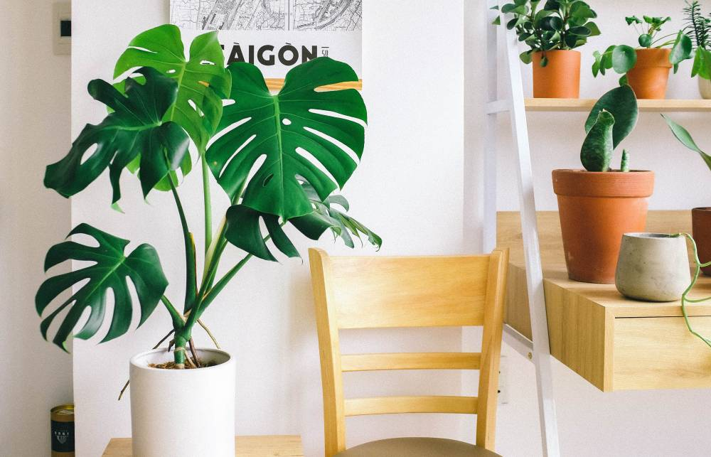 UVH Blog - Guest post: Decorate and Brighten Up Your Home with Indoor Plants